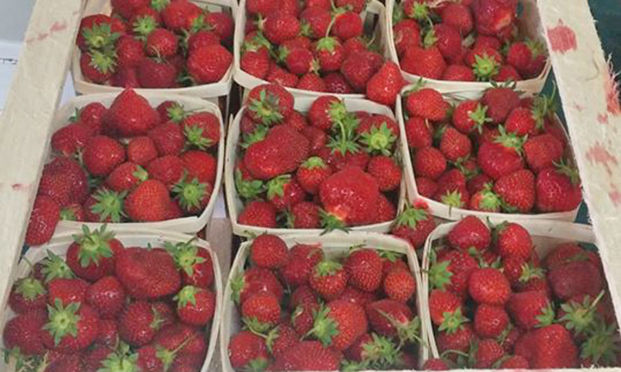 Haveracres Strawberry Farm